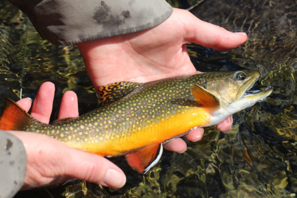Fly Fishing in the Spanish Pyrenees​