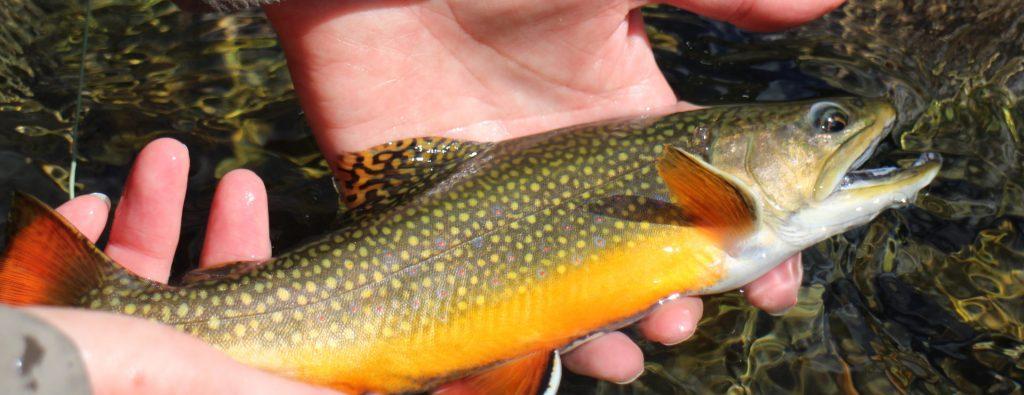 spain-flyfishing